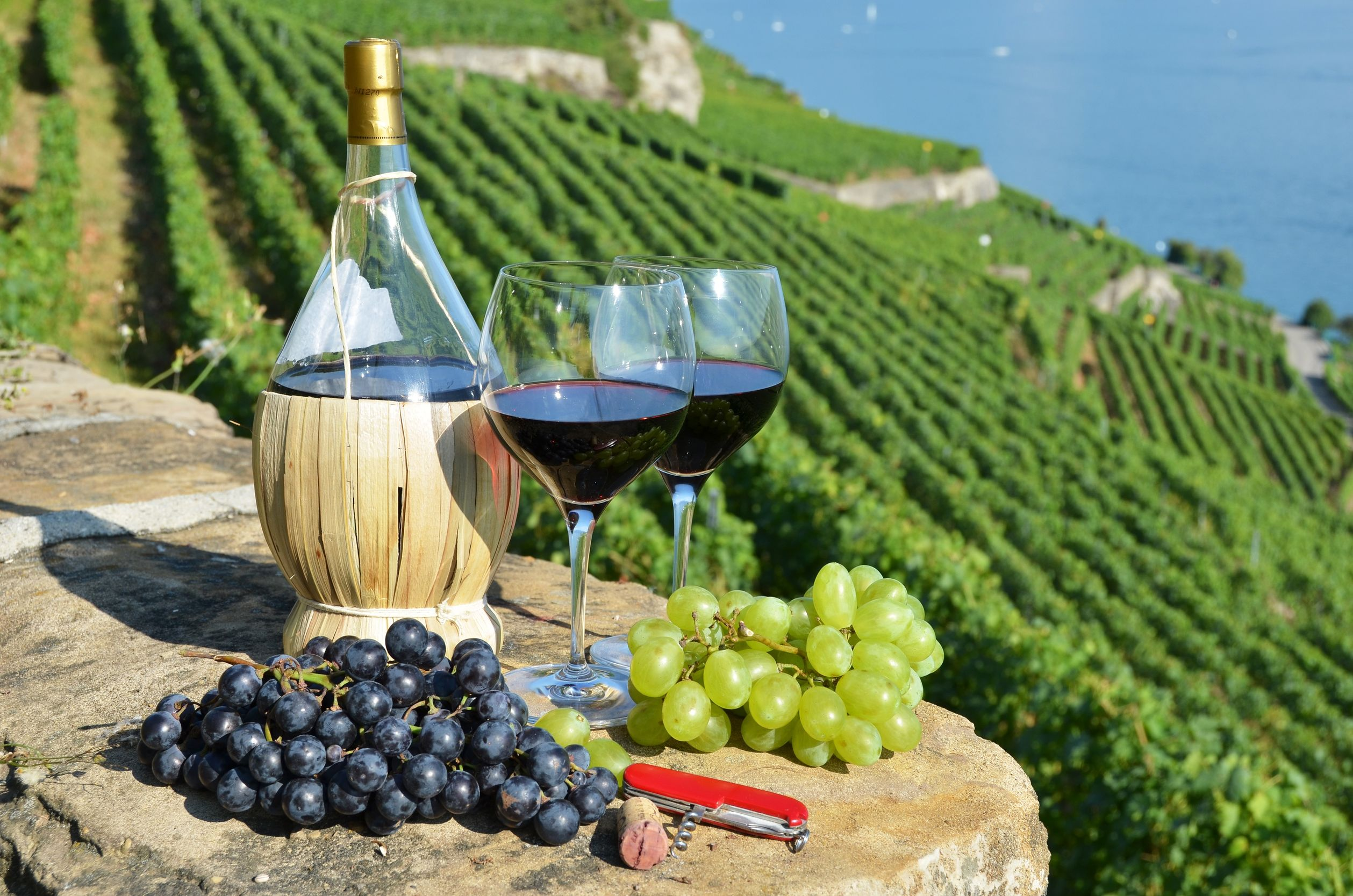 Top 5 wine regions of Italy