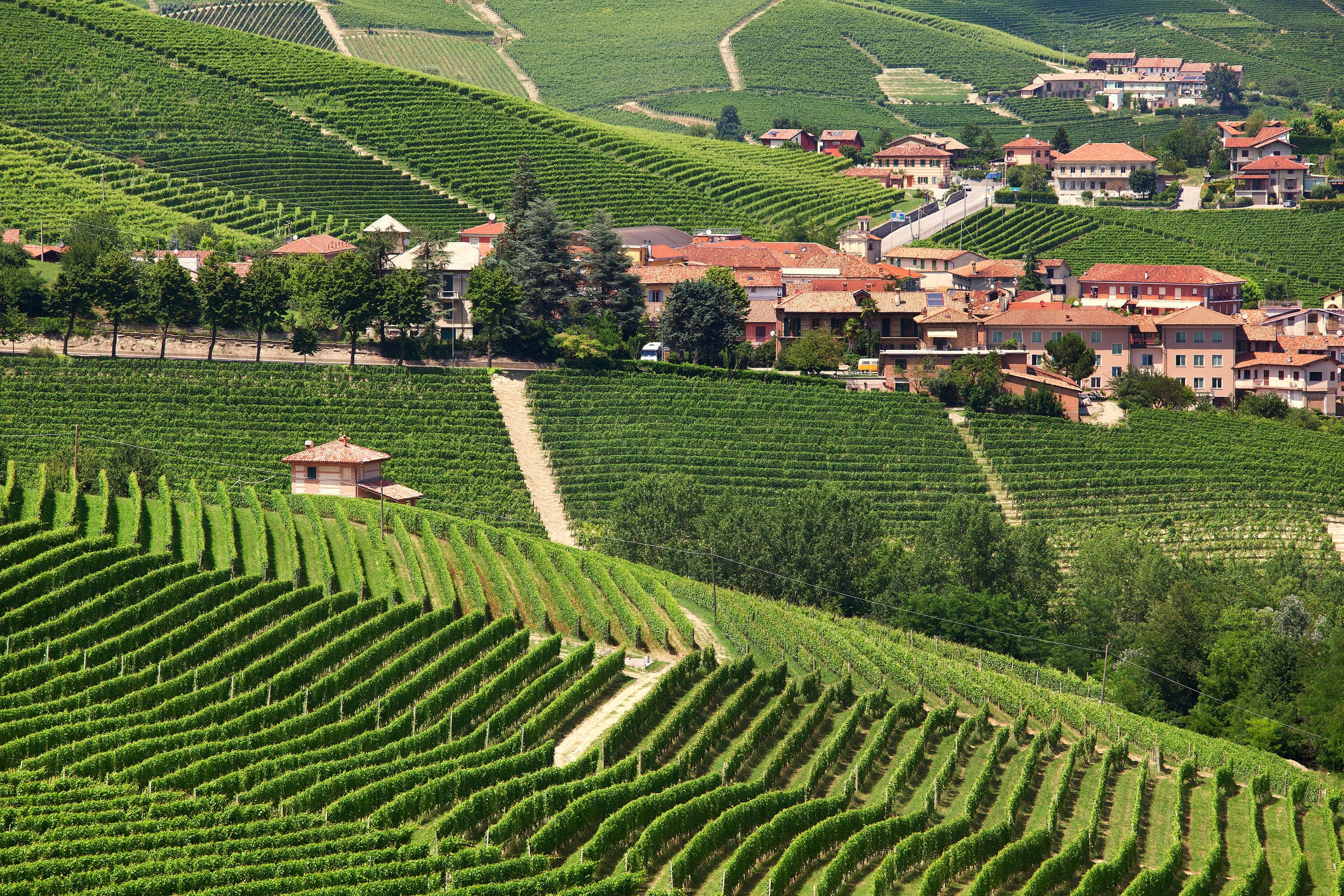 Barolo vineyard - best wine in italy