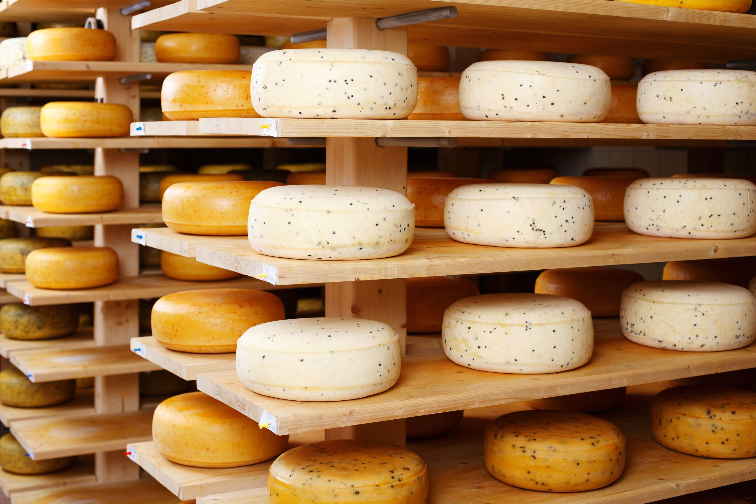 Visit cheese factories