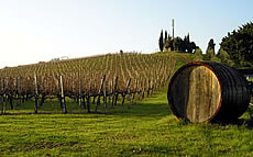 The Chianti Area