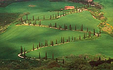 images/tours/cities/tuscany-road.jpg